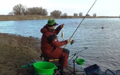 Как правильно ловить плотву на фидер
