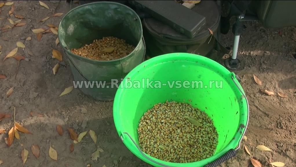 приготовить прикормку для карпа с кукурузной мукой