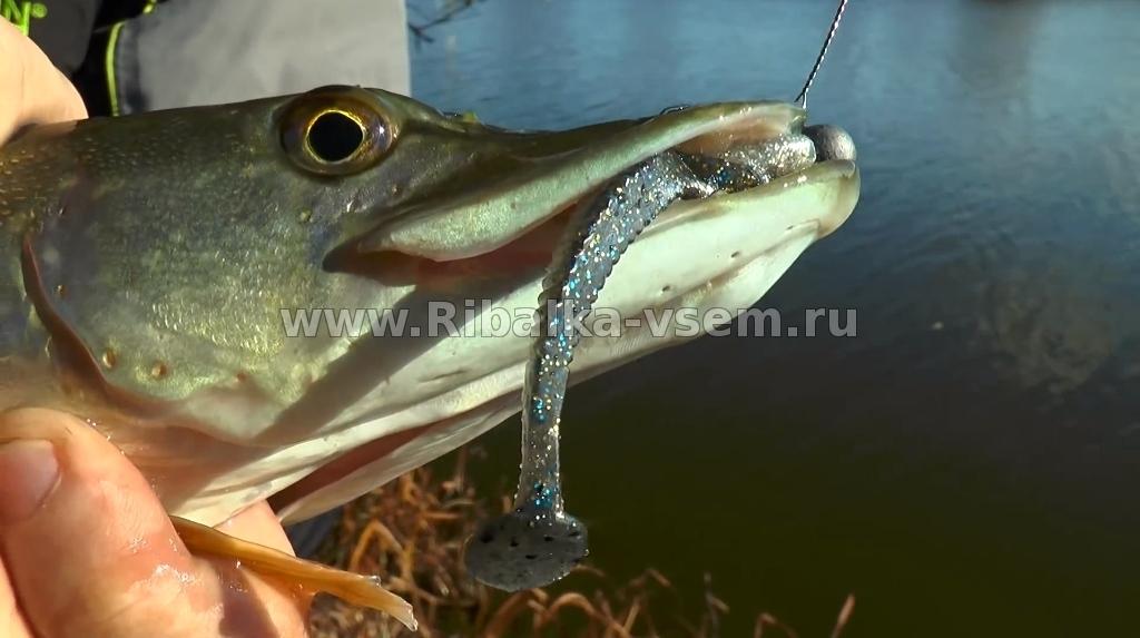 для каких рыб подходит приманка