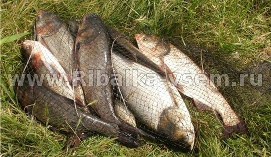 прогноз рыбака в макеевке