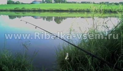 Ловля леща на сало и применение этой насадки для других видов рыб