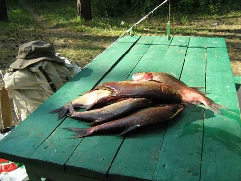как летом на рыбалке сохранить рыбу на