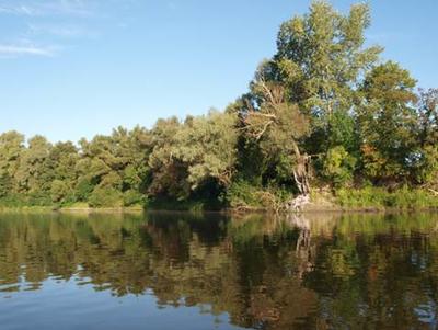 Рыболовная блесна Цикада для ловли спиннингом